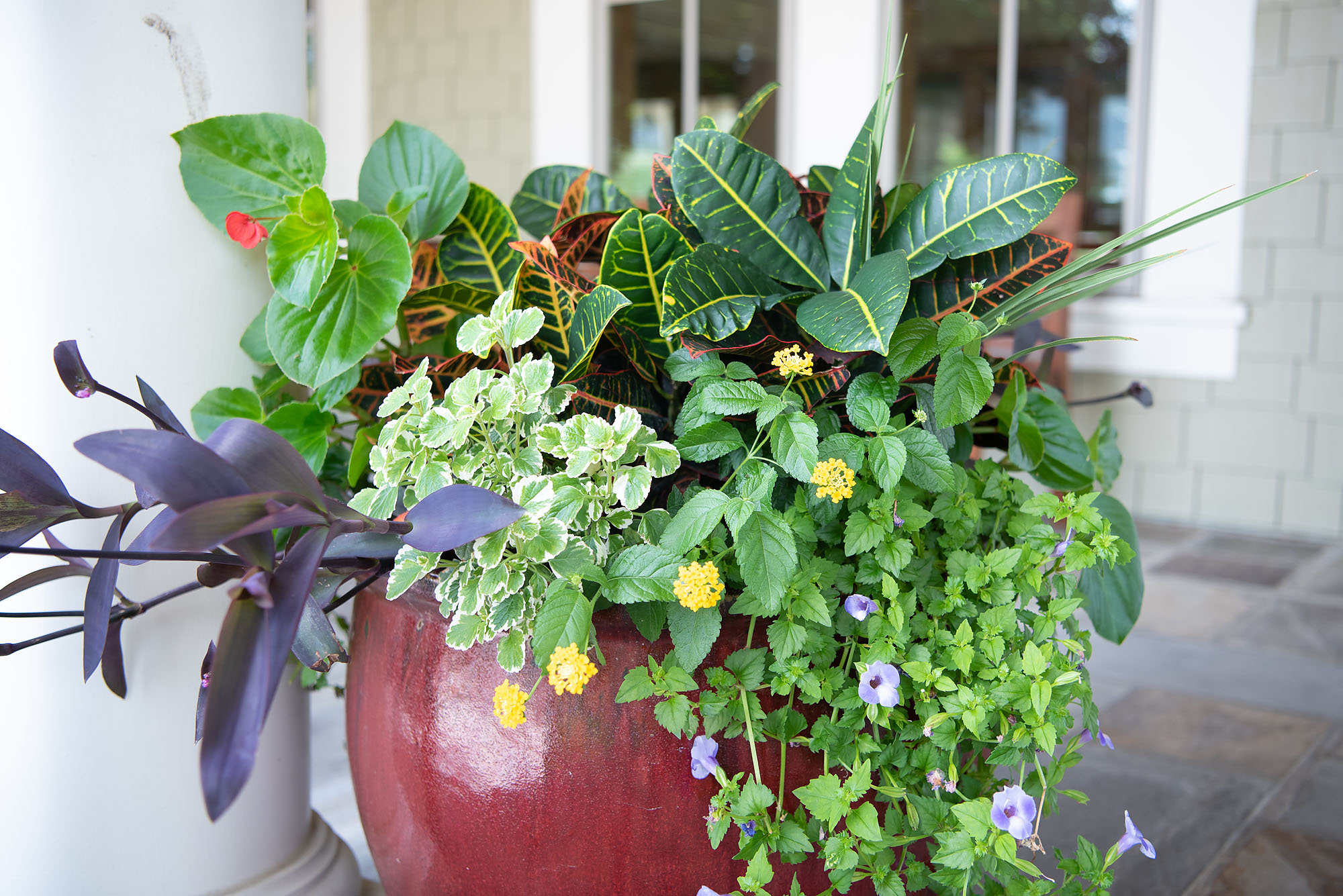 #TeachingTuesday: Angelonia, Wax Begonias, and Lantana